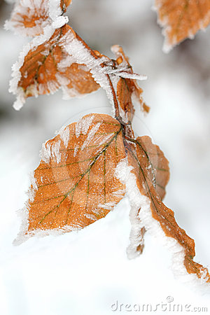 Winter leaf with frost