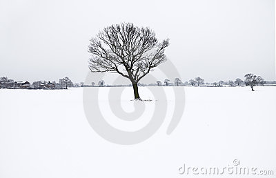 Winter lone bare tree