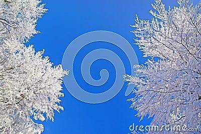Winter nature beauty