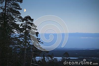Winter night / moonlight / landscape