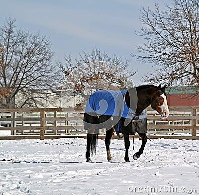 Free Winter Paddock Stock Images - 4355914