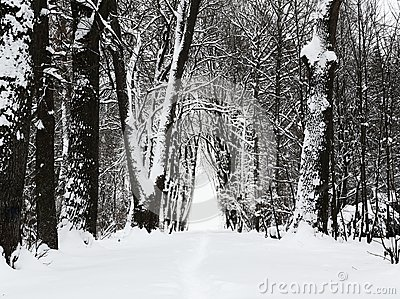 Winter park alley
