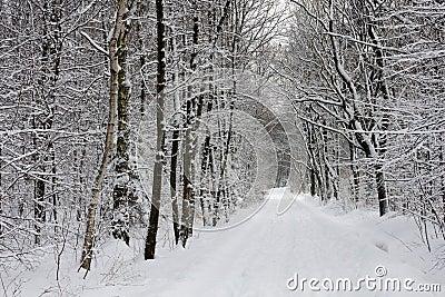 Winter park road