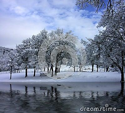 A Winter Park Scene