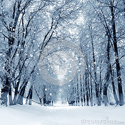 Free Winter Park, Scenery Royalty Free Stock Images - 34291339