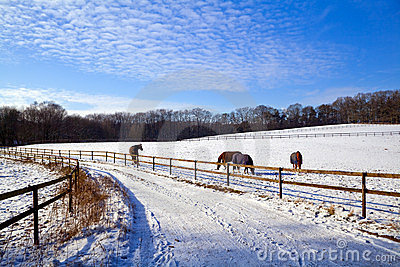 Winter pasture with horses