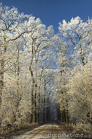 Free Winter Path Royalty Free Stock Photography - 3948757