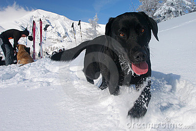 Winter pet joy