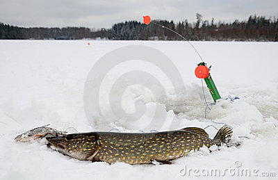 Winter pike fishing in Sweden