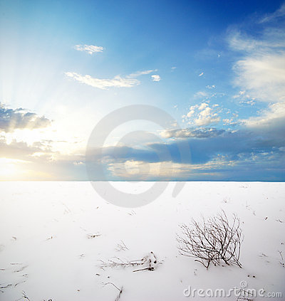 Winter plain
