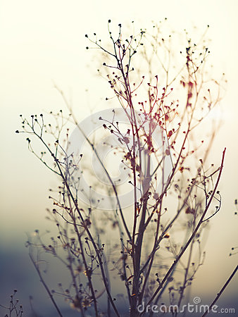Free Winter Plant Silhouette Royalty Free Stock Photo - 59337855