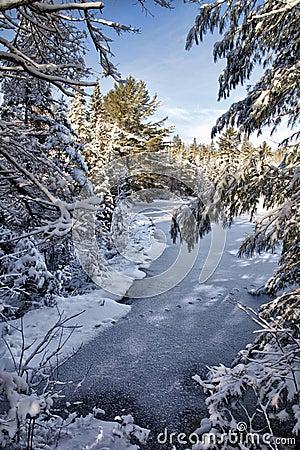 Winter Pond Scene