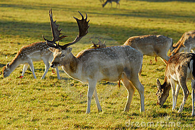 Winter in richmond park