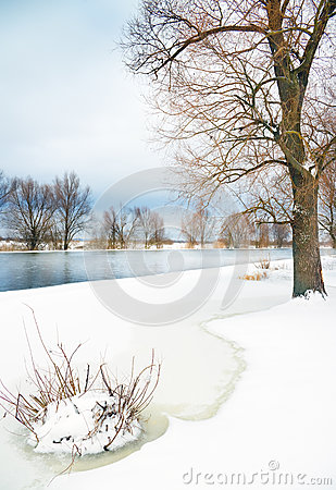 Winter river and trees