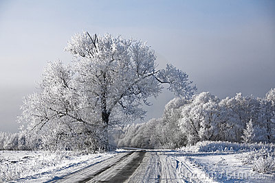 Winter road landscape frosted trees rime