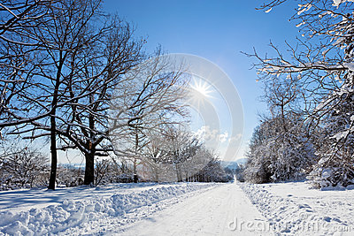 Winter road landscape with snow covered trees