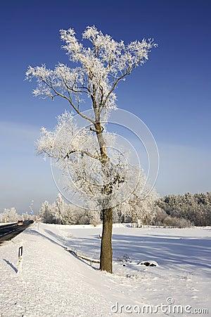 Winter road scenery