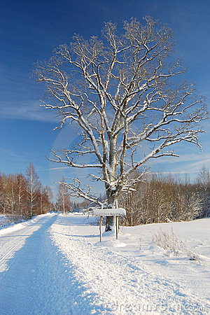 Winter road with sign and tree