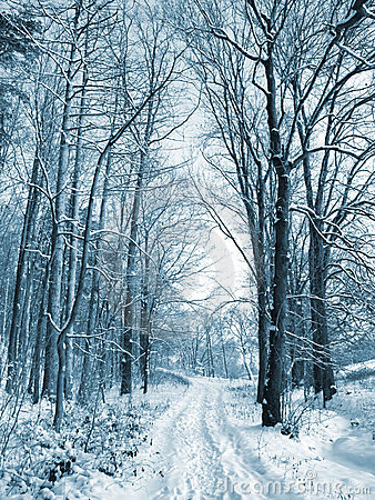 Free Winter Road To Wood Royalty Free Stock Photography - 17063117