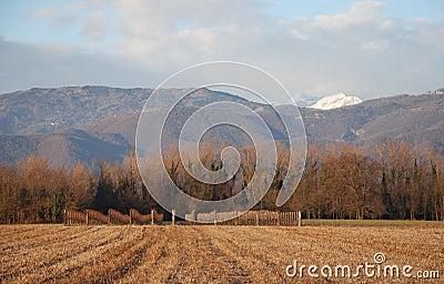 Winter in Rural Friuli