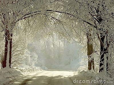 Winter rural road through the frozen trees