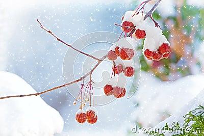 Winter s Beautiful Bounty