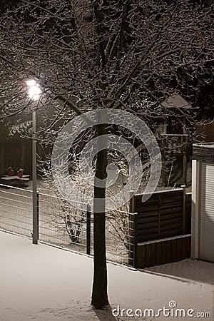 Winter s night tree.
