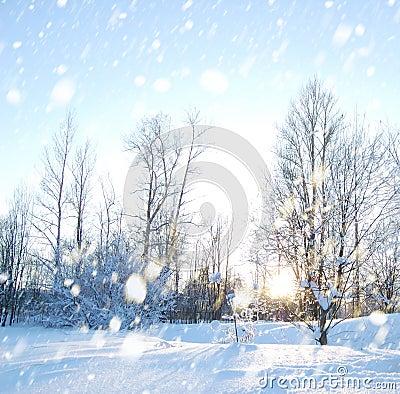 Free Winter Scene Stock Image - 12923091