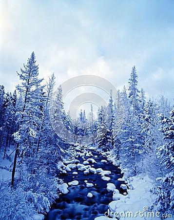 Free Winter Scene Stock Photos - 2295433
