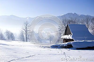 Winter Scene Royalty Free Stock Photography Image 7668187