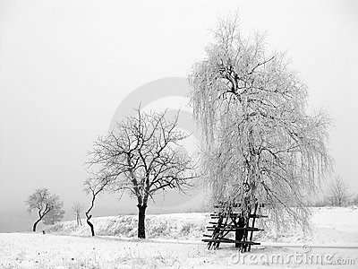 Winter Scene - frost trees