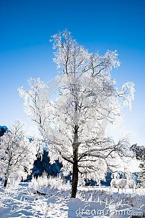 Winter scene from Norway