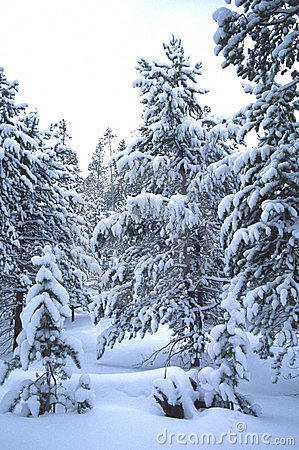 Winter scene, Robertson, WY