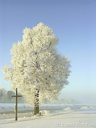 Free Winter Scenery, Frost Covered The Trees Royalty Free Stock Photography - 9641627