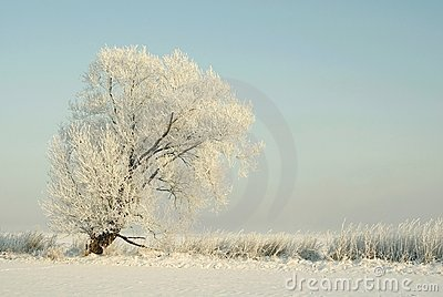 Winter scenery, frost covered the tree