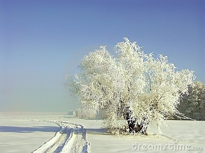 Winter scenery, frost covered the trees