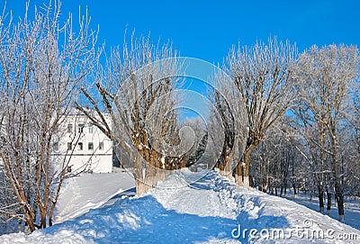 Winter  scenery in park