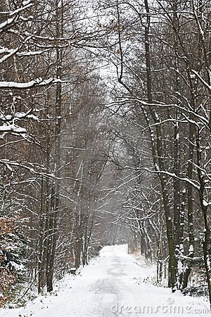 Winter scenery in Poland