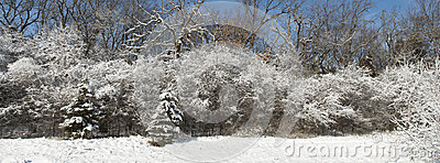 Winter Snow Covered Forest Panoramic, Panorama, or Banner