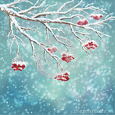 Free Winter Snow-covered Rowan Berry Branch Background Royalty Free Stock Photos - 34874738
