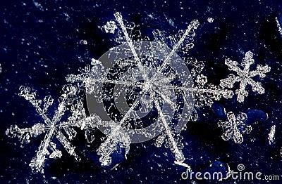 Winter snow crystals