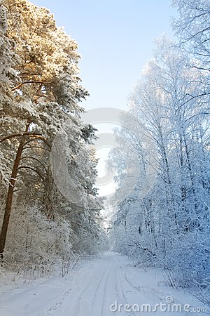 Winter snow forest - the beginning of spring