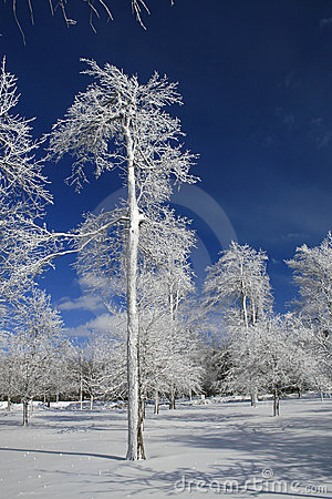 Winter, Snow and Ice Covered Trees, Park