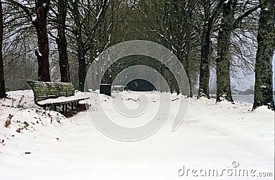 Winter snow in park