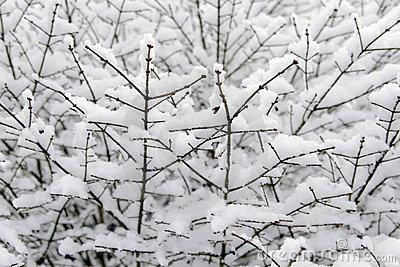 Winter Snow on Plant