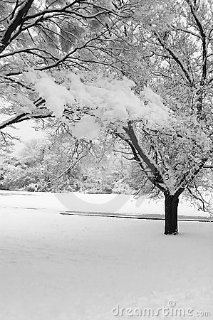 Free Winter Snow Scene Royalty Free Stock Images - 12415319