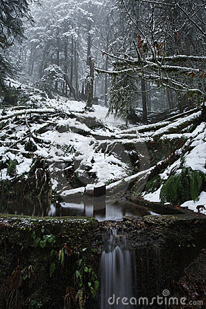 Winter snow scenic valley in the misty forest