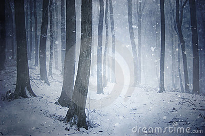 Winter snow storm in a forest with wind blowing th