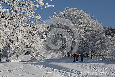 Winter snowparadise Editorial Stock Photo