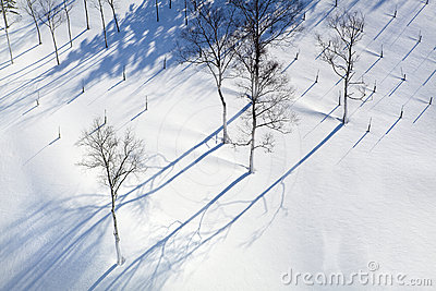 Winter Snowy